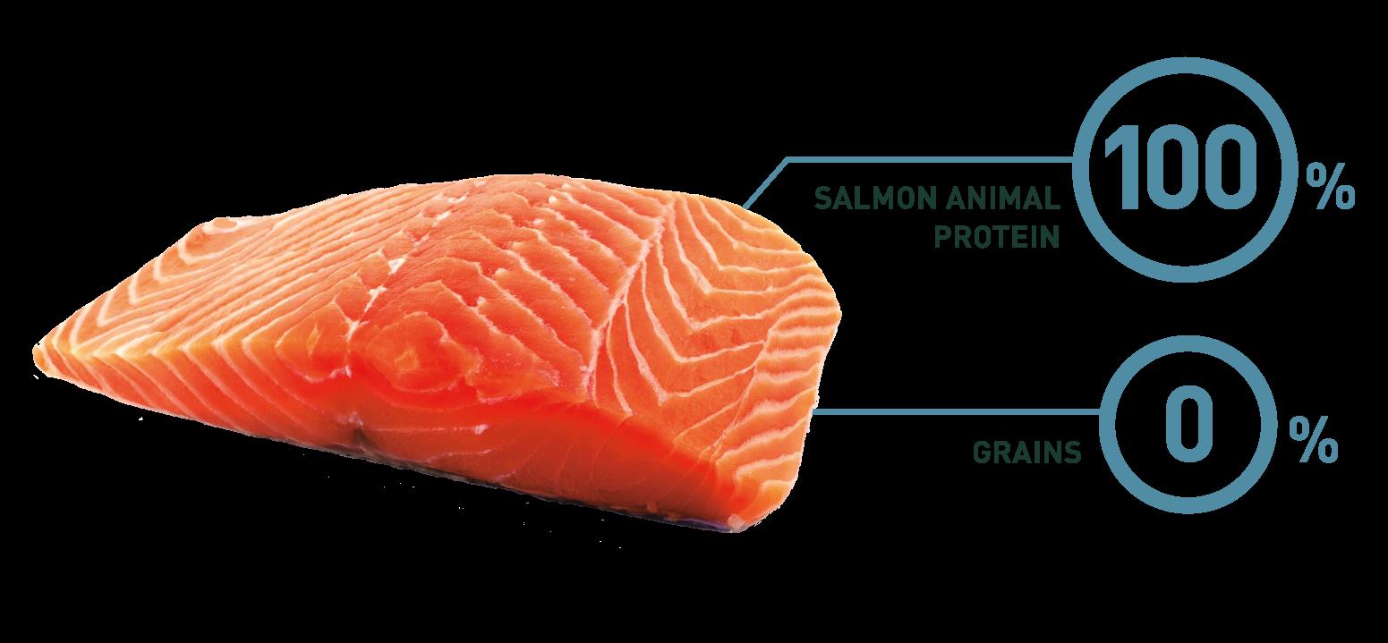 salmon_circles